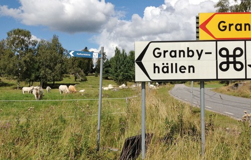 Road signs and cows